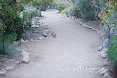 Desert Botanical Garden after Yoga 4.4.13