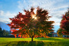Colorful Autumn Tree