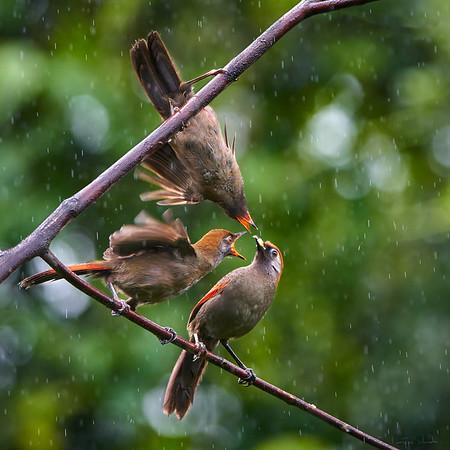 Baihualing Birds Yunnan