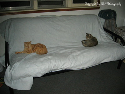 April23, 2006  O'Malley and Akira decided the futon was a great place to sleep after it had been cleaned.  Good thing I covered it with the blanket.
