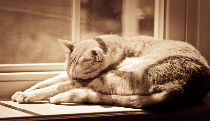 catsInWindow_20100725_0013-2