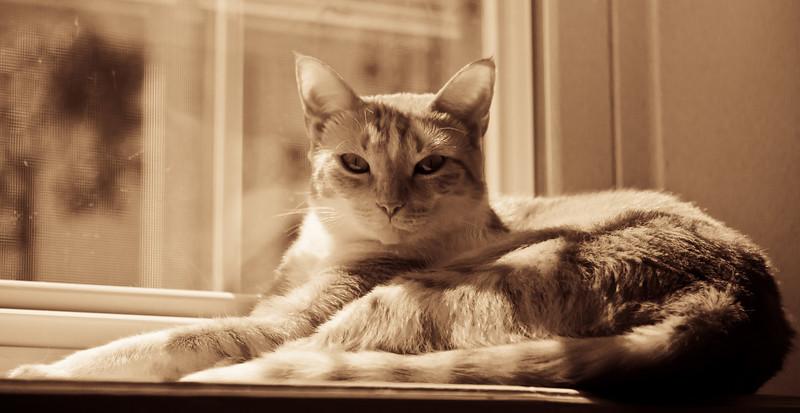 catsInWindow_20100725_0031-2