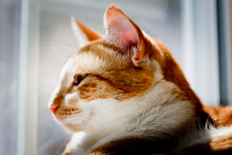 catsInWindow_20100725_0061