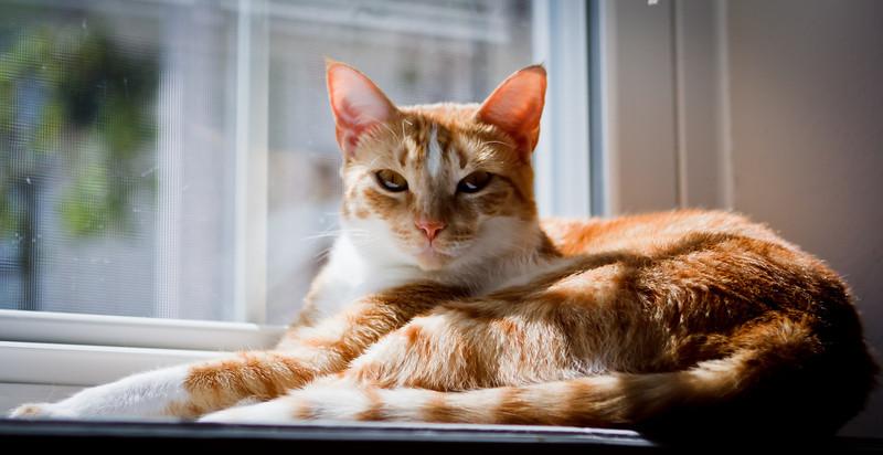 catsInWindow_20100725_0031