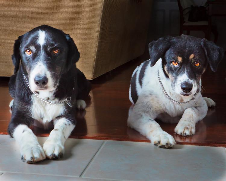 dogsLaborDay_20100904_0004
