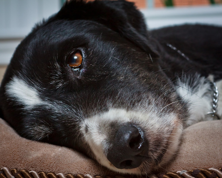 dogsLaborDay_20100904_0044