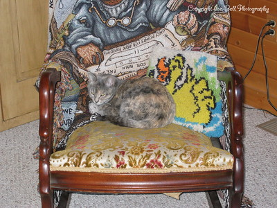 12/07/05  Gravel Gerdy in the rocking chair.