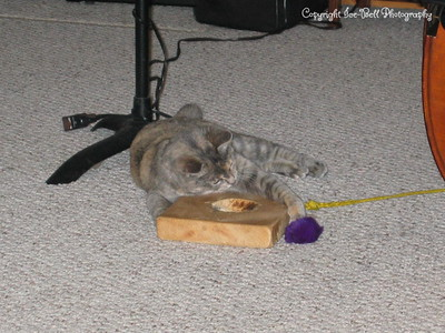12/06/2004  This is dad's newest cat, Gravel Gerdy