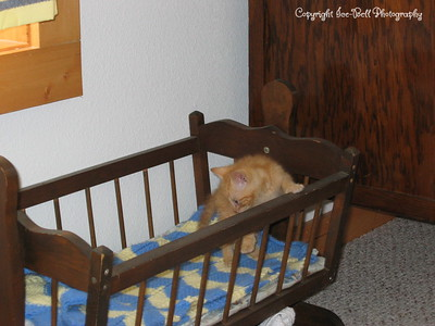 07/03/04  O'Malley is out exploring at my dad's.  He found his way into the babycrib.