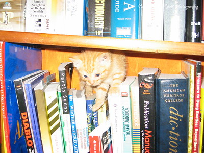 6/22/04  O'Malley is out and exploring my place.  He found his way on top of some books on a bookshelf.