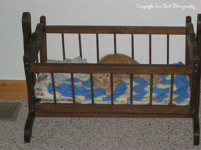 07/31/04  I'm a few weeks older now but I still think this babycrib is a great place to sleep.