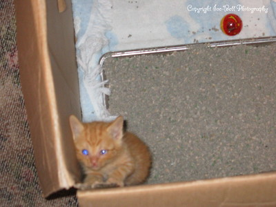 06/18/04  O'Malley just hours after I brougth him home.  Please take me out and hold me.
