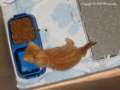 06/18/04  O'Malley just hours after I brougth him home.  Water give me more water!!!
