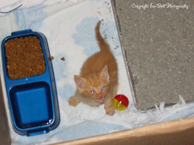 06/18/04  O'Malley just hours after I brougth him home.  He's not for sure about his box at this point.