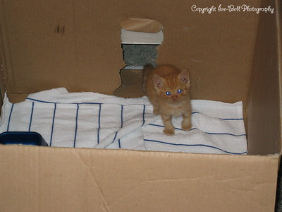 06/19/04  O'Malley exploring his second box.  Created to get the litter box out of his main sleeping and playing area.
