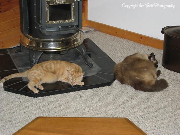 O'Malley and Tiki  Fast asleep
