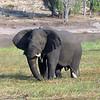 Africa2004_249_(2)_237