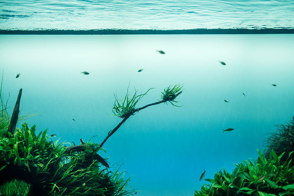 Forests Underwater by Takashi Amano at Lisbon Oceanarium