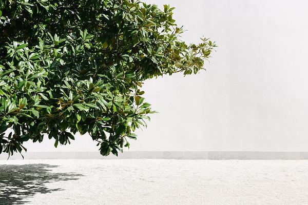 A tree outside Fundaçao de Serralves