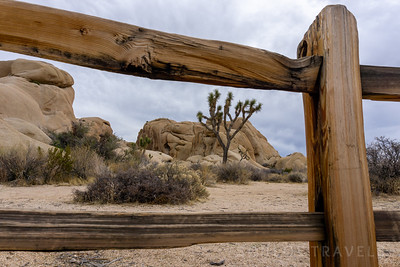 Joshua Tree National Park | California