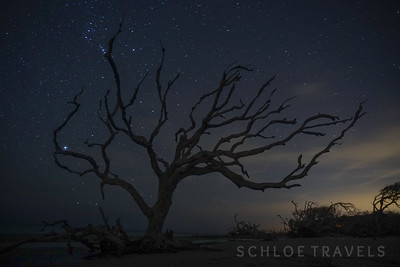 Stars over Driftwood Beach | Georgia