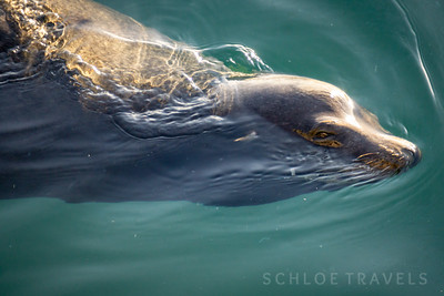 Sea Lion | Morro Bay, California