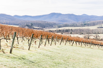Pippin Hill Vineyards | Charlottesville, Virginia