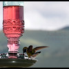 I so love just watching these little birds! They are my favorite ever, so cute!