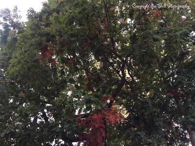 20151016-Fall2015-02