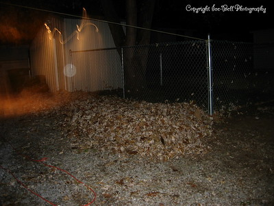 11/08/06  Whats left of the leaves from outside the fence.  I'd picked up half the driveway on Sunday and Monday night I did the grassy area.  This might be 1/3 of the leaves that had been out there maybe less then that.