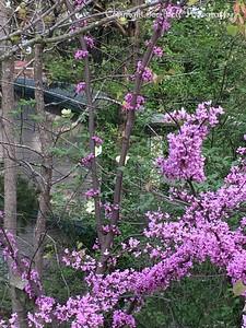 20150412-Spring2015-02