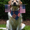 Murphy showing his patriotic colors for Memorial Day weekend.