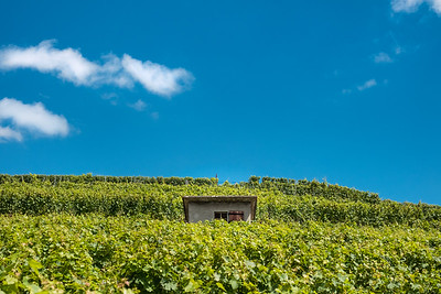 A cabin in the vineyard, Lavaux
