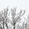 Ice <br /> Toronto, Ontario, Canada - 12.23.13<br /> Credit: J Grassi