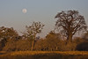 Moon over Moremi