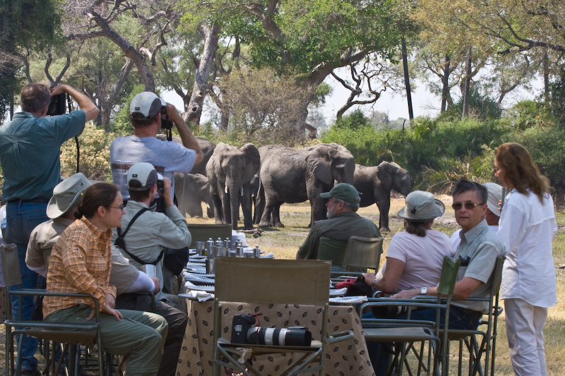 One of my favourite experiences was our lunch at Mombo.  This elephant herd entertained us as we ate lunch by a river.   They checked us out, drank, crossed the river, played in the water and had mud baths on the far bank.  The food and human company was good to.