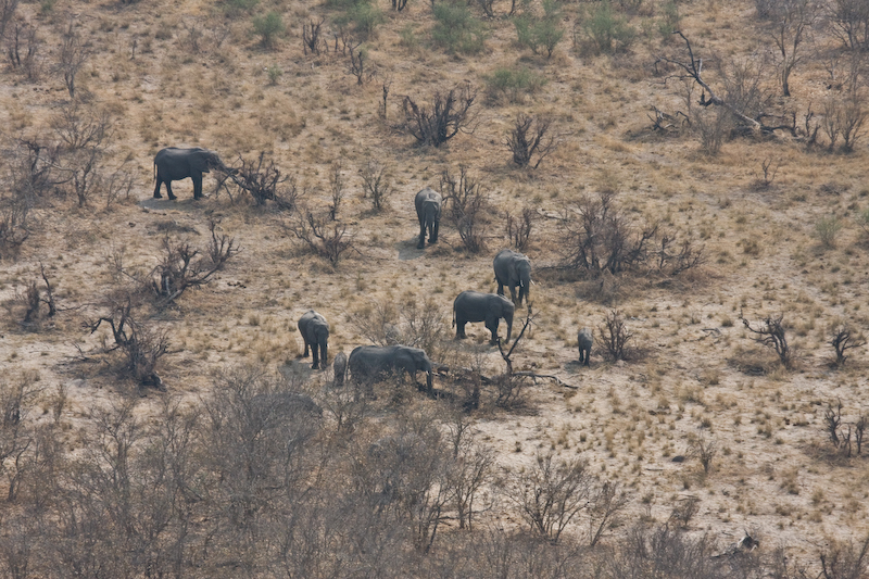 Elephants from Helicopter