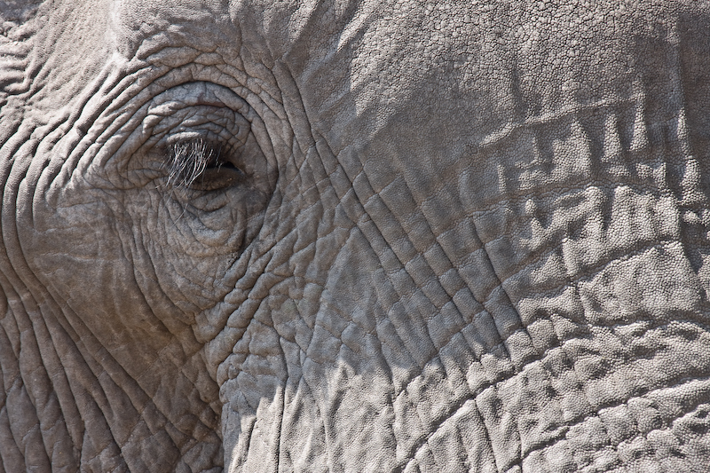 Elephant eye.  He was about 5 feet away, then charged us.