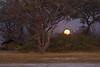 Moonrise at Moremi Camp.