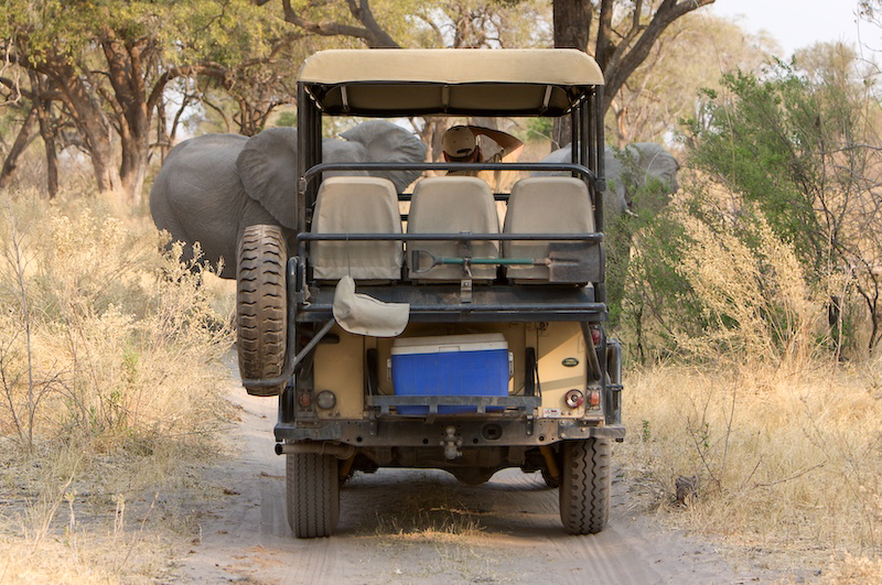 Elephants block our Land Rover.   That's me in the back taking the next photo .  Photo by Deborah Olivo