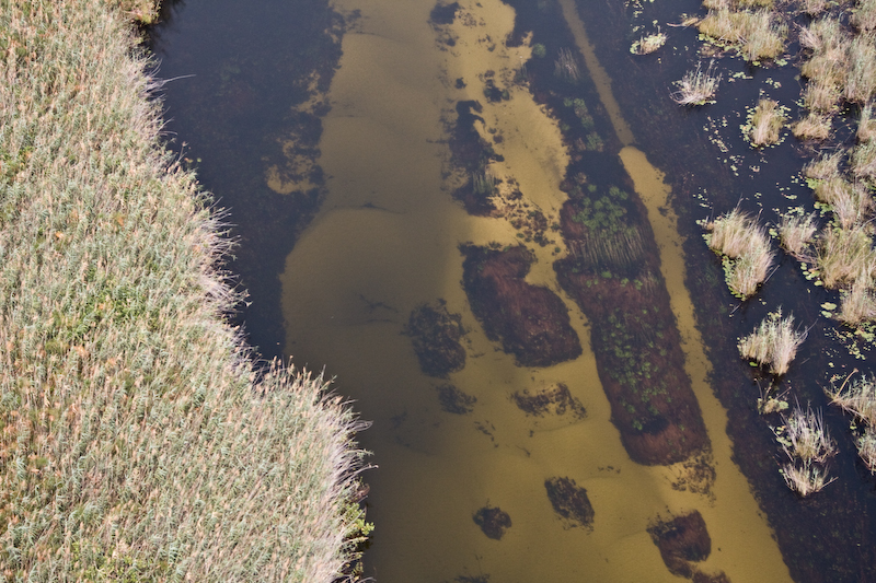 River in Okavango Delta.   The waters flow from Angola & Namibia, though the Okavango Delta, then into the Kalahari Desert.