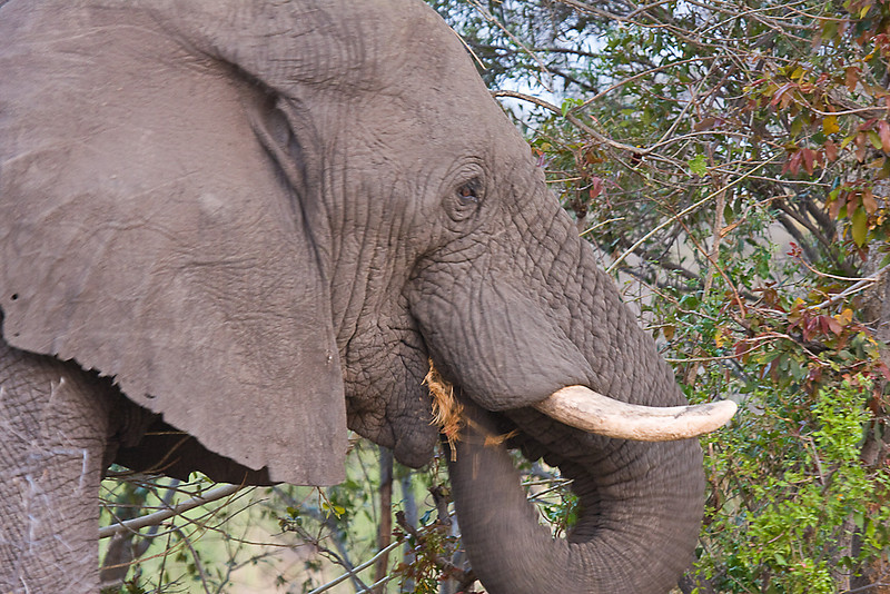 This elephant blocked our Land Rover & ignored us even though we were less than 3 meteres away