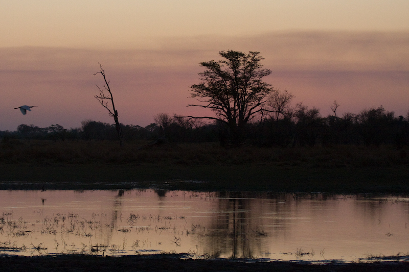 Sunset in Moremi National Park