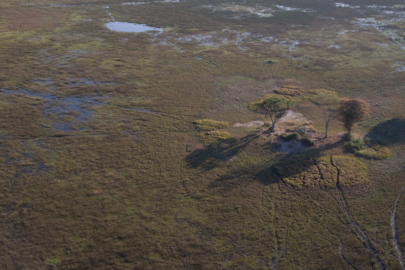 Island in the swamp.   You can see the animal trails