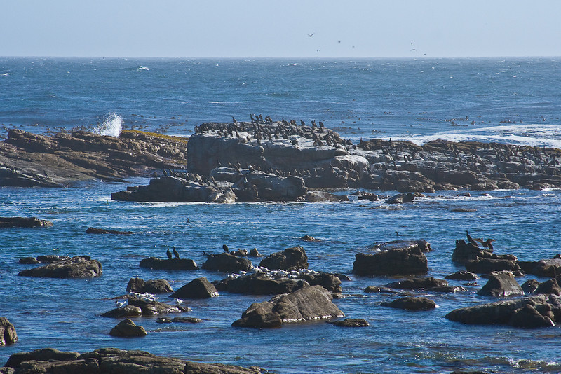 Birds at Cape of Good Hope