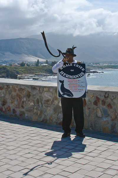 The Whale Crier blows the horn when he sees a whale.