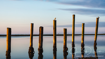 Pilings at East Point Cafe, Florida
