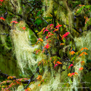 Hoh Rain Forest Detail, Olympic National Park