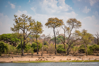 The Banks of the Zambezi River