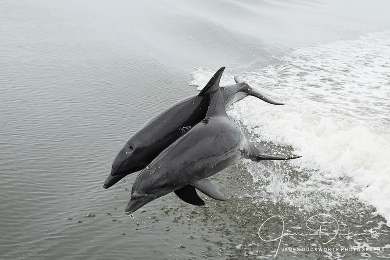 Dolphin Play